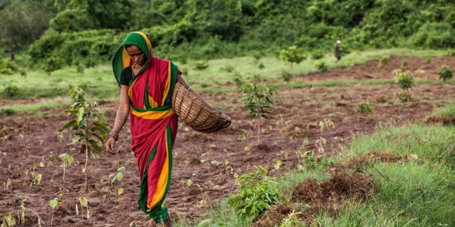 Inde améliore son agriculture avec la Blockchain pour les subventions des engrais