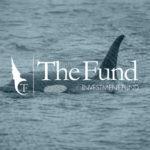 Comment investir comme une « baleine » ? Vaut-il mieux investir Soi-même ou par les Fonds fiduciaires ? Le cas TheFund.io